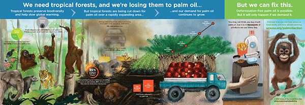 RANT: Tropical Deforestation & Palm Oil