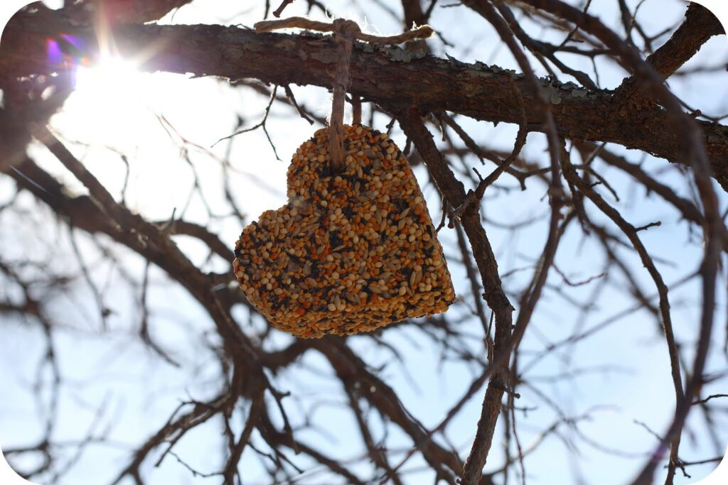 bird-seed-heart