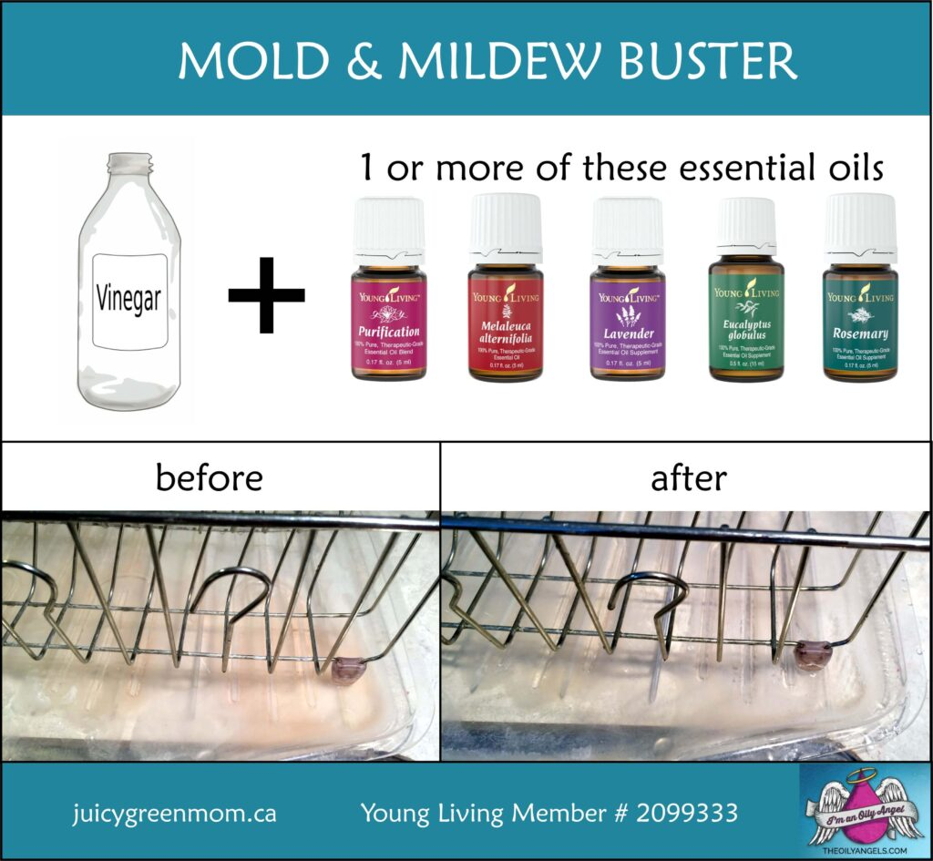 DIY mold and mildew buster