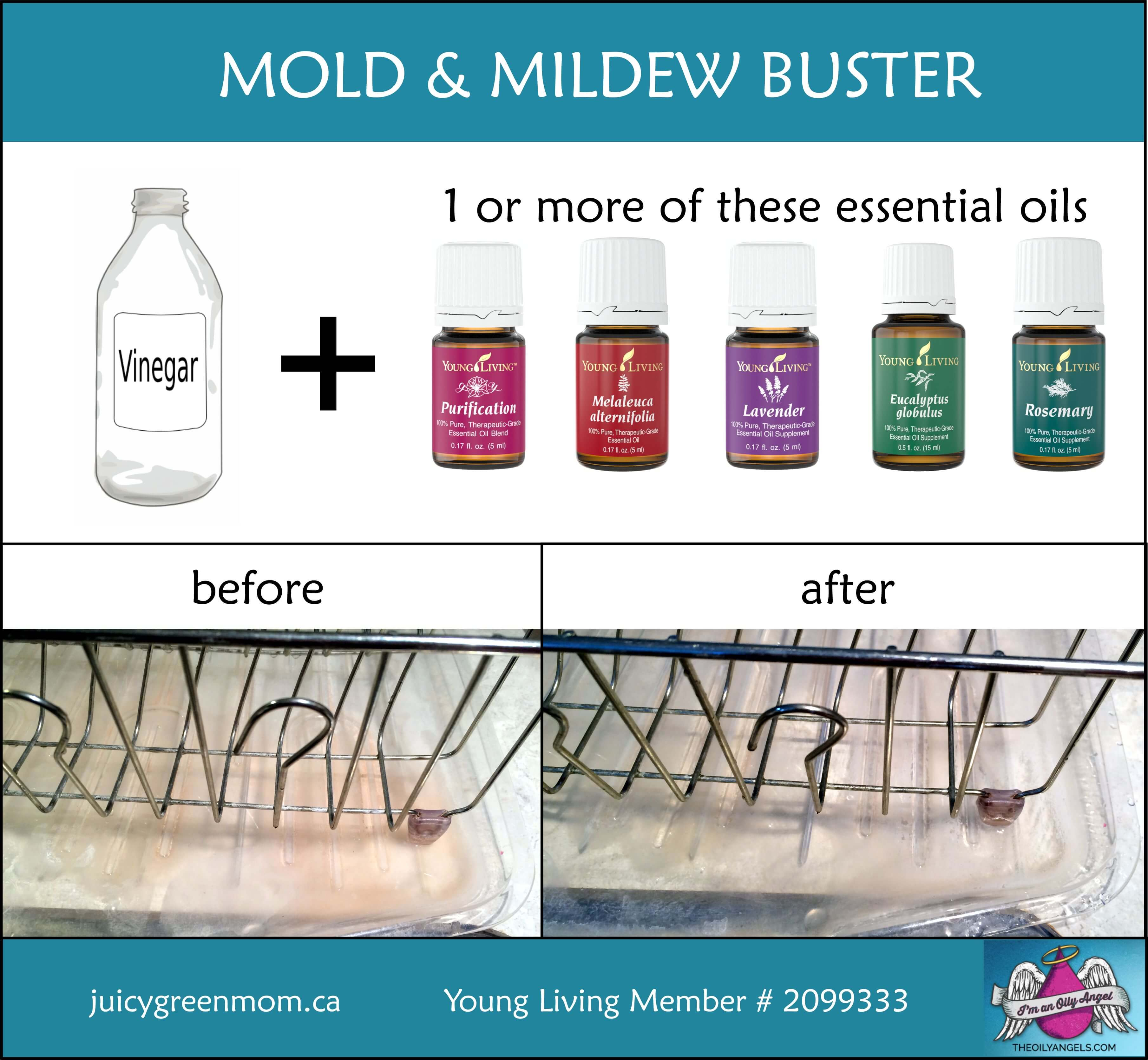 mold mildew buster juicygreenmom juicy green mom. Black Bedroom Furniture Sets. Home Design Ideas