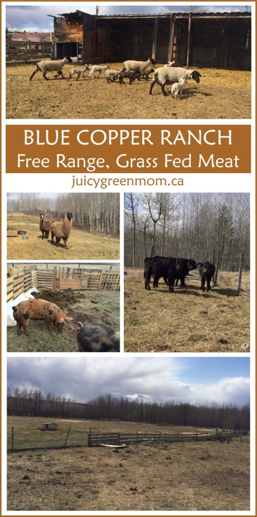 blue-copper-ranch-juicygreenmom