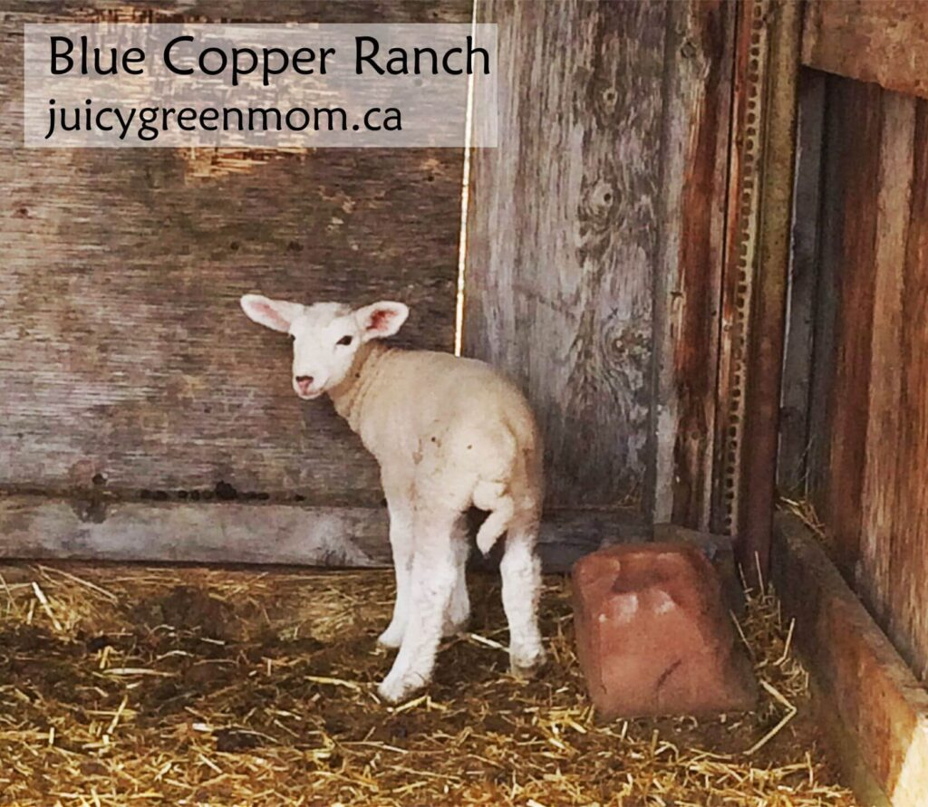 blue-copper-ranch-lamb-juicygreenmom
