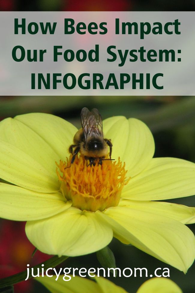 How Bees Impact Our Food System: Infographic