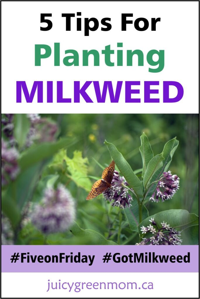 five on friday tips for planting milkweed juicygreenmom
