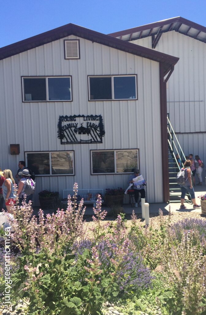 Young Living distillery lavender farm in Utah juicygreenmom