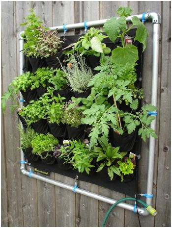 vertical garden pocket planter