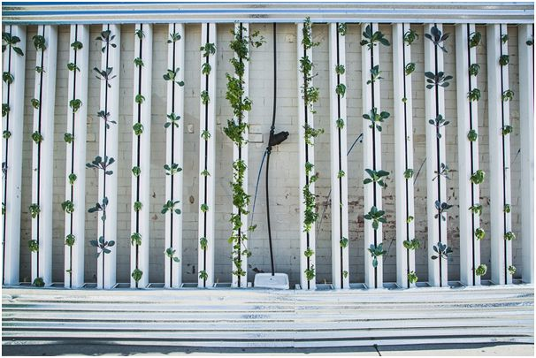 GUEST POST: 7 Simple Steps To Start Your Own Vertical Garden
