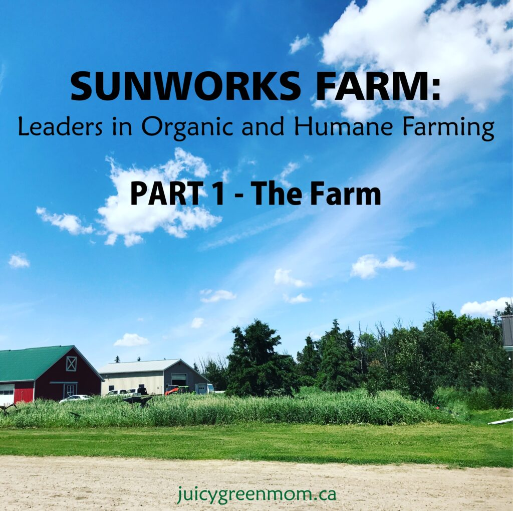 Sunworks Farm: Leaders in Organic and Humane Farming PART 1 – The Farm