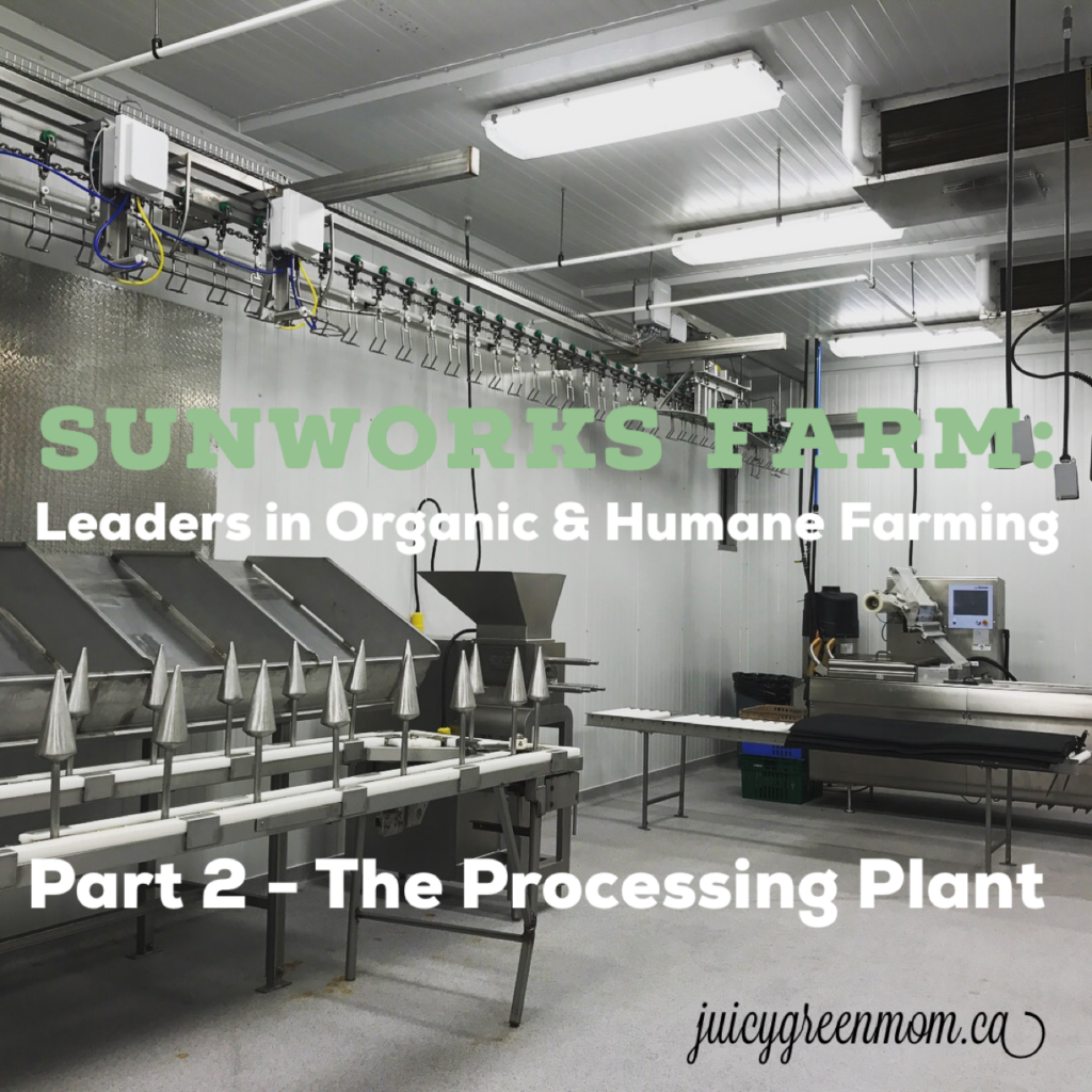 Sunworks Farm: Leaders in Organic and Humane Farming PART 2 – The Processing Plant