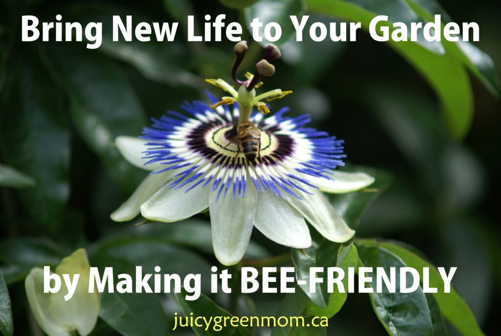 GUEST POST: Bring New Life to Your Garden by Making it Bee-Friendly