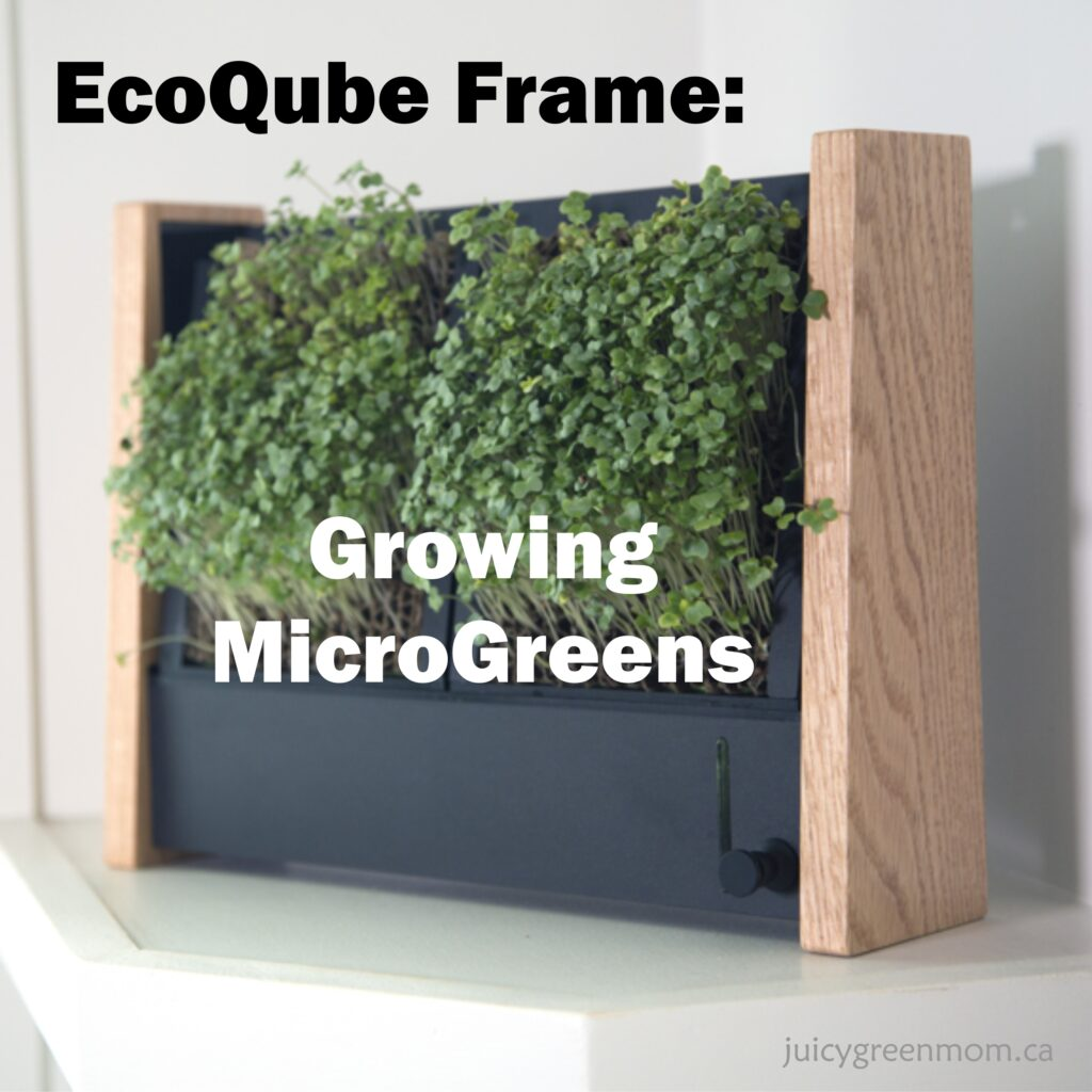 ecoqube frame growing microgreens
